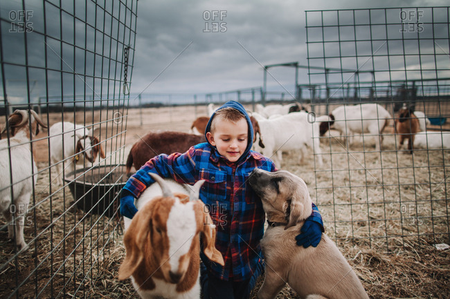 A boy petting goats