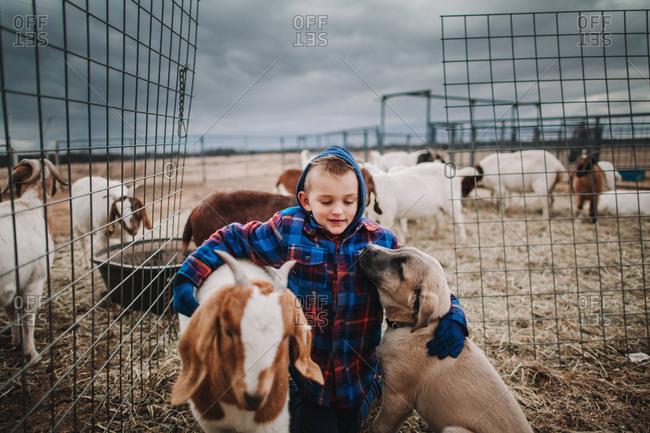 A boy petting goats