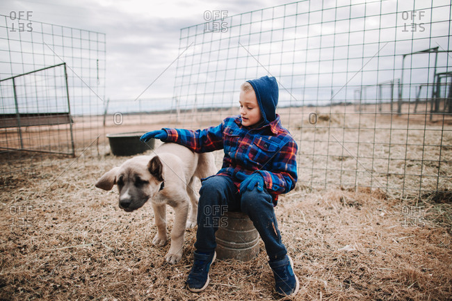 A boy playing with a puppy