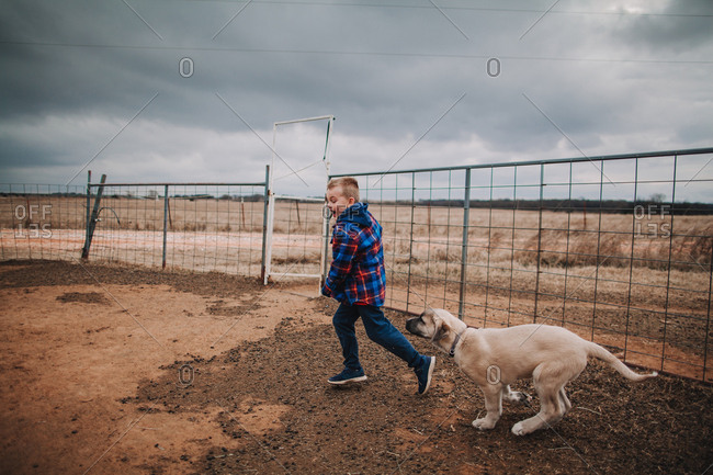 A puppy chasing a boy