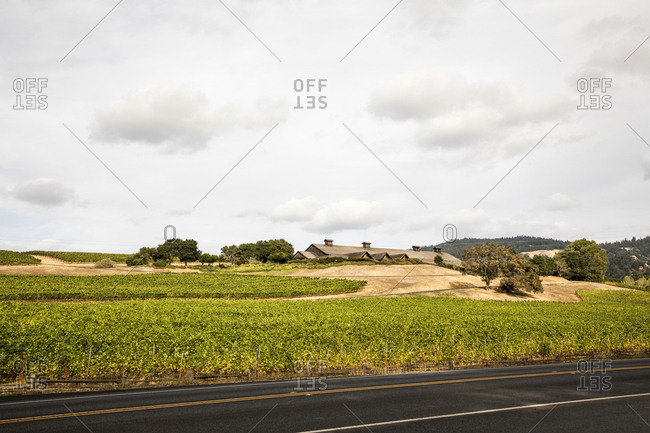 Winery and vineyard along highway in Mendocino County