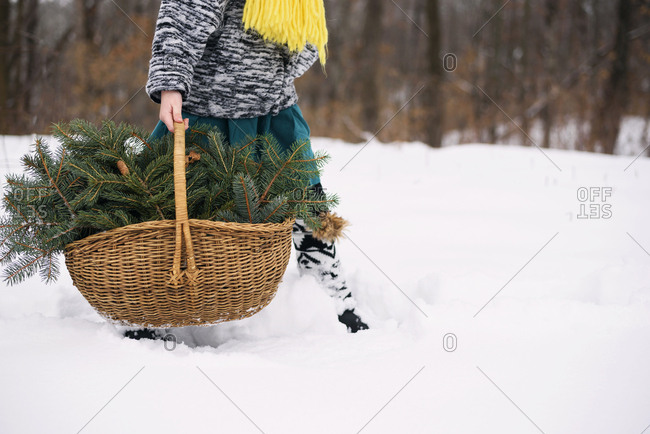 Child walking in the snow with basket full of pine boughs