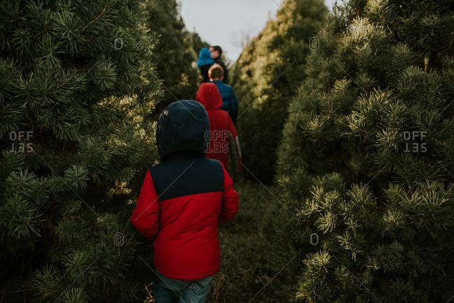 Family walking through tree farm at Christmas