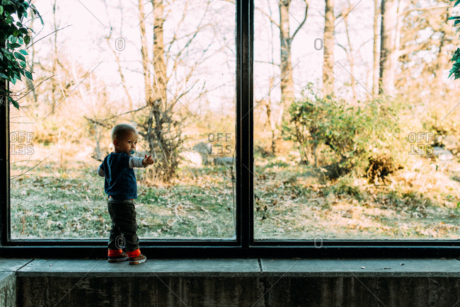 Little boy standing by window at zoo pointing
