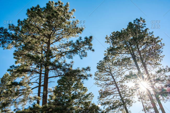 Low angle view of sun shining through trees