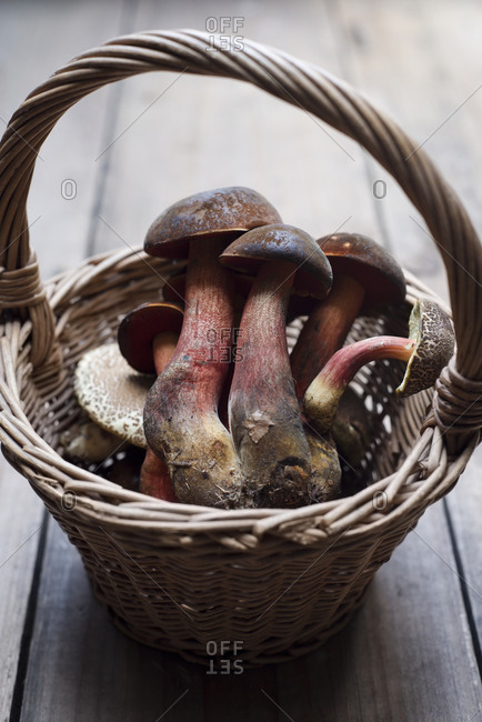 Bay boletus in wicker basket
