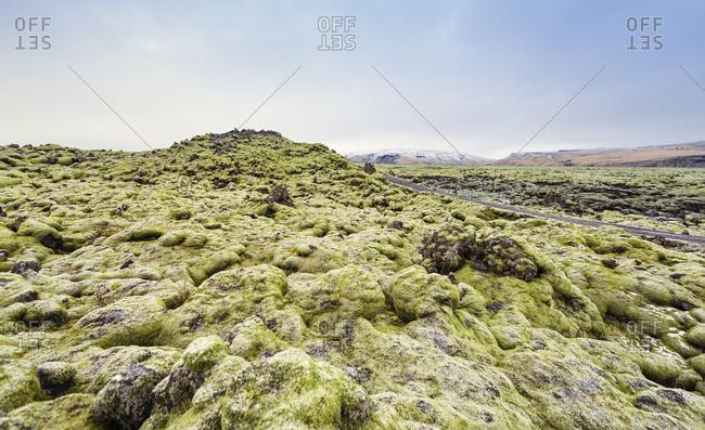 Iceland- mossy lava fields
