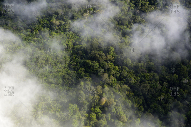 Brazil- Para- Amazon rainforest and clouds