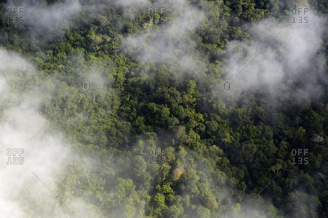 Brazil- Para- Amazon rainforest and clouds