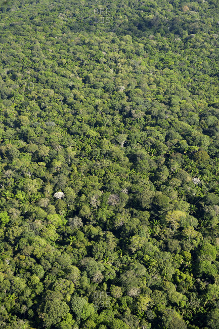Brazil- Para- Amazon rainforest- aerial view