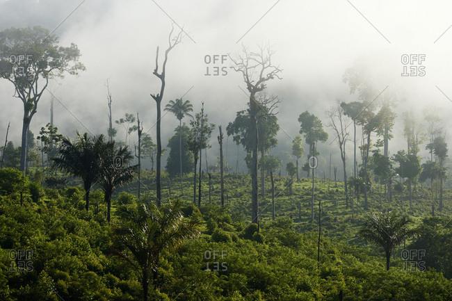Brazil- Para- Itaituba- Amazon rainforest- slash and burn
