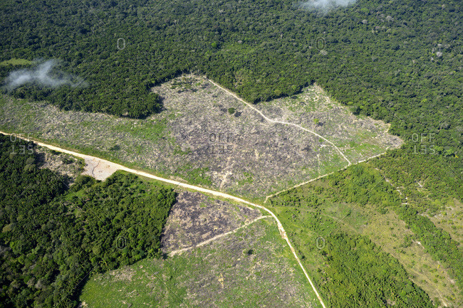 Brazil- Para- Itaituba- Amazon rainforest- slash and burn- reclamation of pastureland