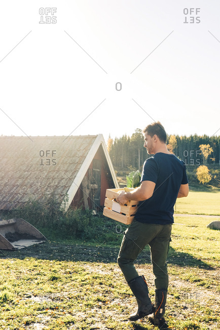 Full length rear view of mid adult man carrying crate at organic farm
