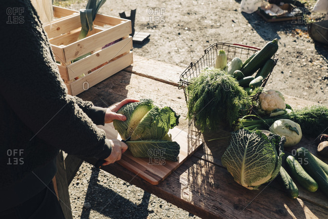 Midsection of mature female farmer cutting cabbage at table