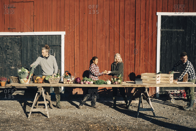 Male and female farmers arranging organic vegetables on table outside barn
