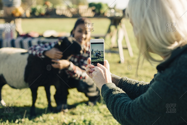 Mature woman photographing friend and sheep with mobile phone at field