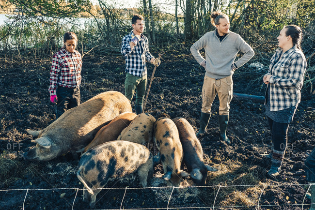 Mid adult female instructor talking with farmers by pigs on organic farm