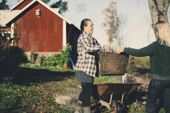 Mid adult female farmer handing basket full of straw to friend at organic farm