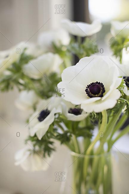 Closeup decorative flowers in vase