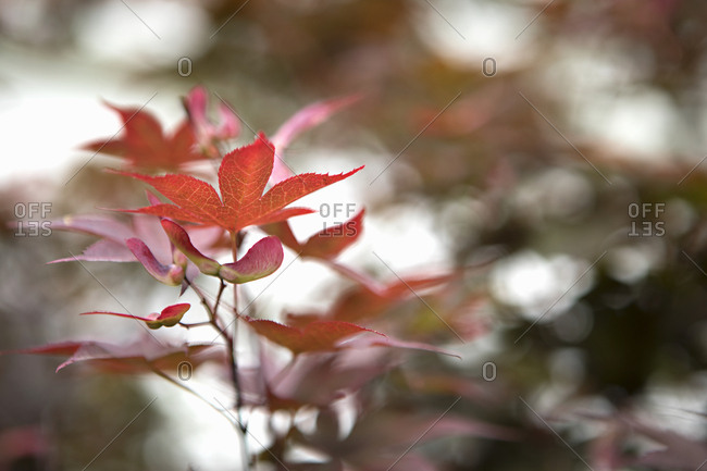 Focused autumnal leaves at park