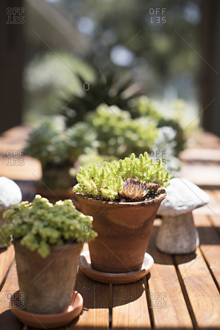 Outdoor potted plants getting sunlight on wooden deck