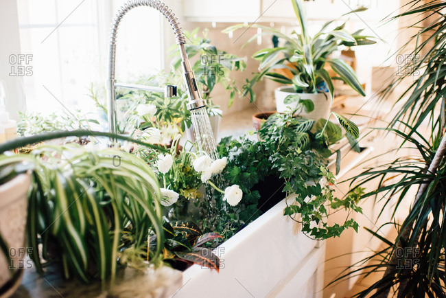 Kitchen overflowing with potted plants being cared for