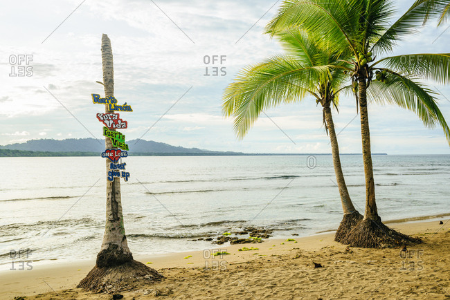 Colorful signs attached to a palm tree on the beach in Puerto Viejo, Costa Rica