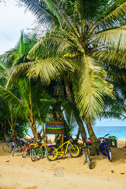 Colorful bicycles parked under coconut tree at Bluff Beach in Bocas del Toro, Panama