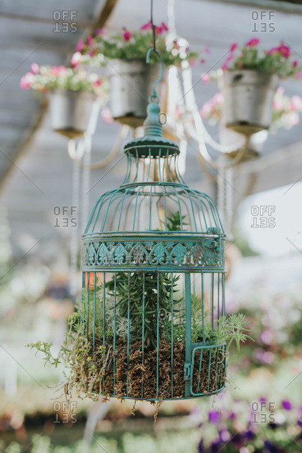 Flowers in a bird cage
