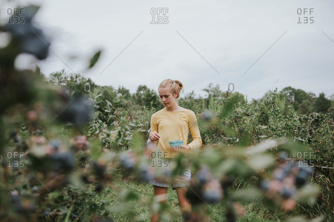 Tween girl picking blueberries