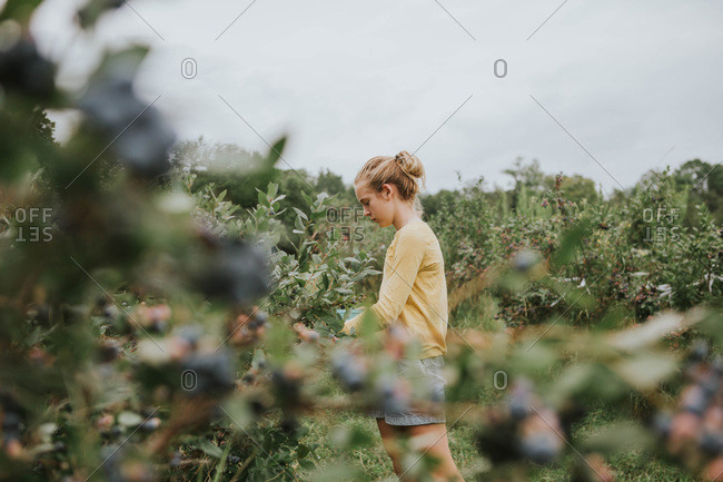 Tween girl picking blueberries in an orchard