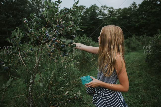 Side view of a young girl picking blueberries