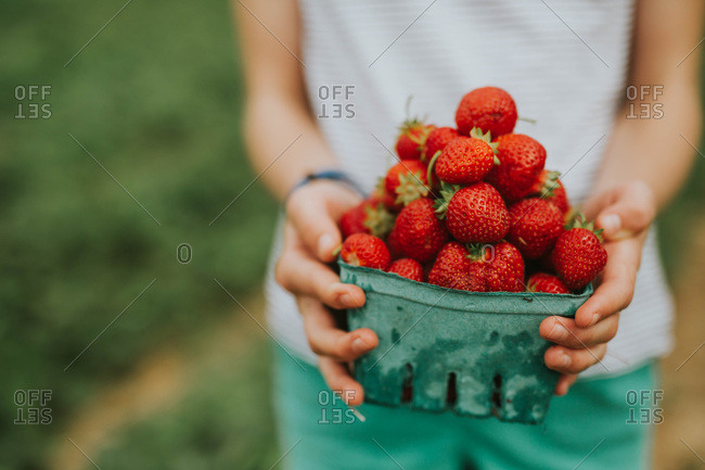 Close up of a girl holding a pint of freshly picked strawberries