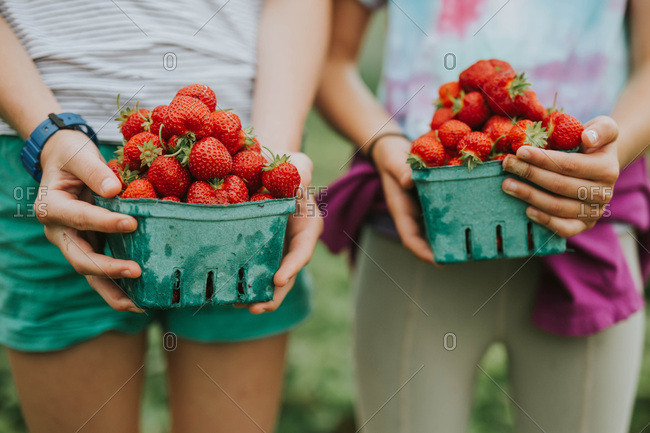 Close up of two girls holding a pint of freshly picked strawberries
