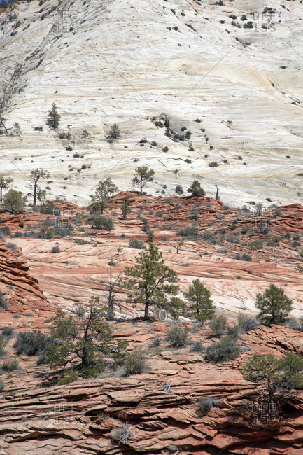 Trees growing on rocky outcrops of mountain slope