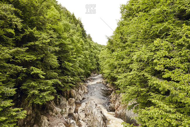 Tree-lined river in scenic gorge