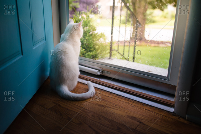 White cat looking out glass door
