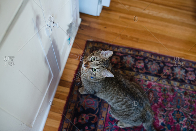 Overhead view of cat looking up