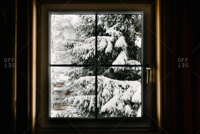 View of snowy trees from window