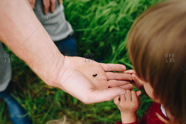 Toddler looking at small caterpillar in an adult hand