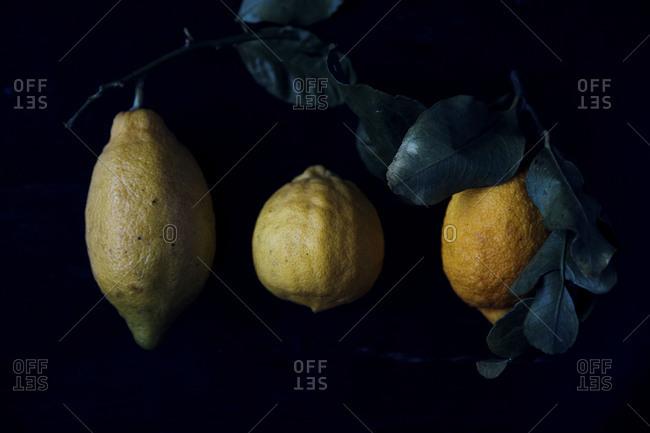 Three bergamot fruits blossoming in a row