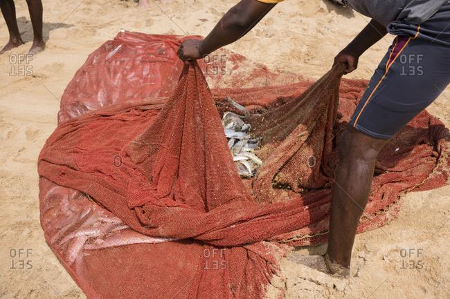 Fishermen on the beach sorting manually caught fish in Negombo, Sri Lanka