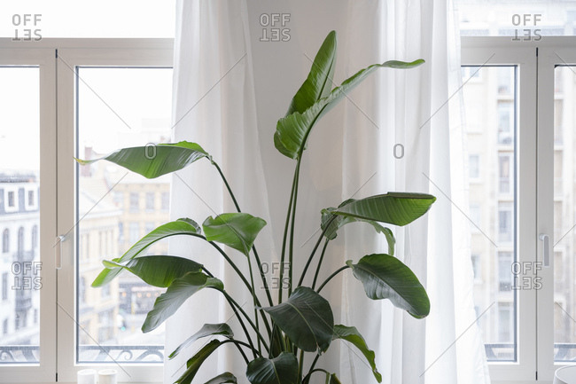 Green houseplant by a window in an apartment