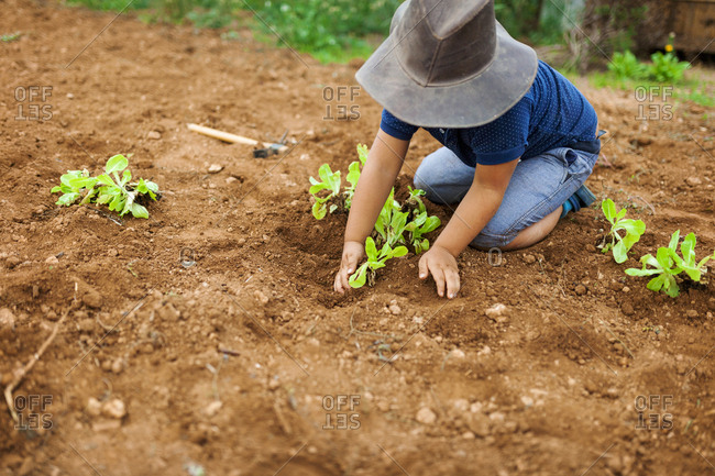 Small boy tending to organic plants in dirt