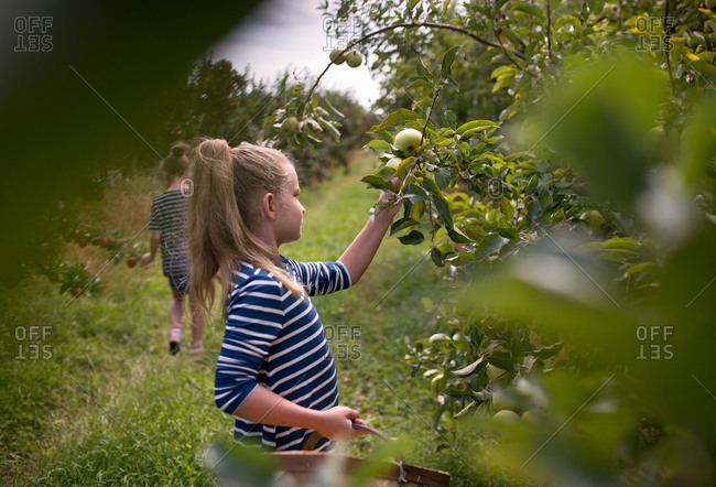 Girl framed by trees picking apples