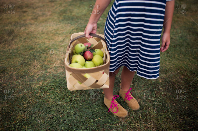 Girl holding a basket full of fresh picked apples
