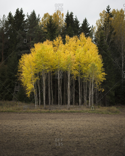 Trees in Soderasens National Park in Skane, Sweden
