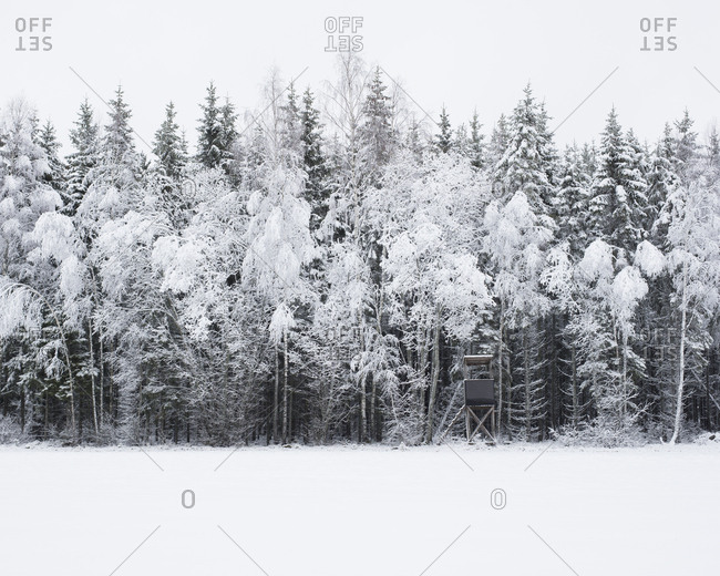 Snow covered forest in Smaland, Sweden