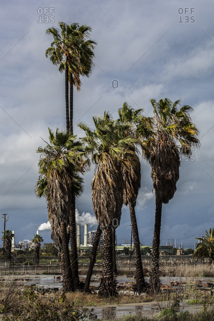 Palm trees in front of factories
