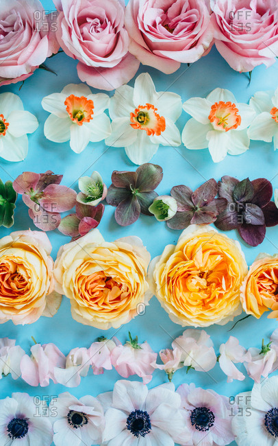 A variety of fresh springtime blooms on blue paper